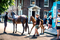 Goffs London Sale 2017-14