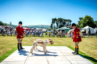 Builth Hound Show 2018