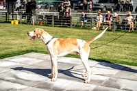Builth Hound Show 2019-8