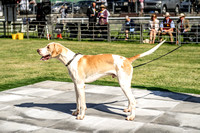 Builth Hound Show 2019-9
