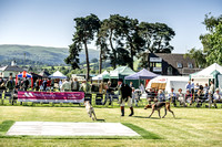 Builth Hound Show 2019-18