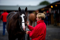 DBS Premier Yearling Sale 2014 Day 1