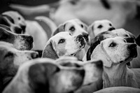 DSFH Kennels 2015-24 bw