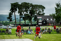 Builth Wells Hound Show 15-14