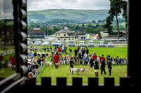 Wales & Border Counties Hound Show 2015