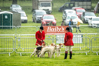 Lowther Hound Show 2017-5