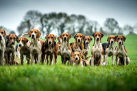 Limerick Foxhounds - 18.10.17