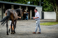 Goffs LR Sale 2018-15