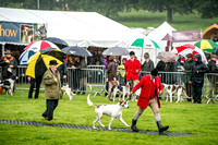 Lowther Hound Show 2017-17
