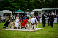 Builth Wells Hound Show 15-17