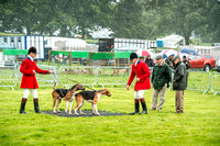 Lowther Hound Show 2017-19