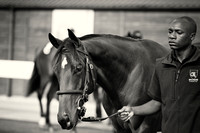 DBS Premier Yearling Sale 2014 Day 2