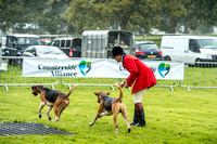 Lowther Hound Show 2017-23